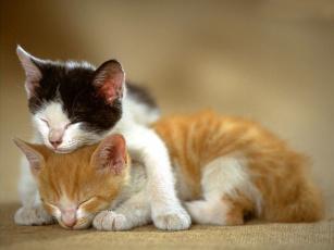 Картинка животные коты