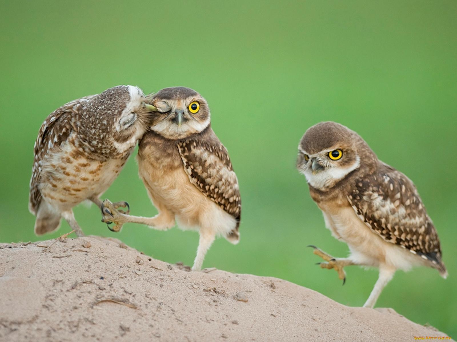 Прикольные животные и птицы