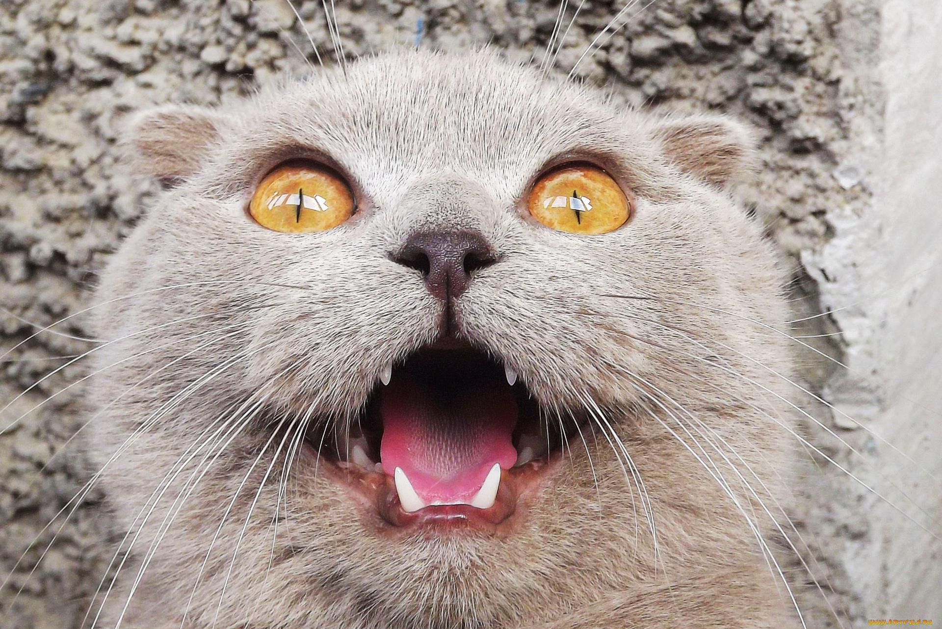Спасибо, картинки кота приколы
