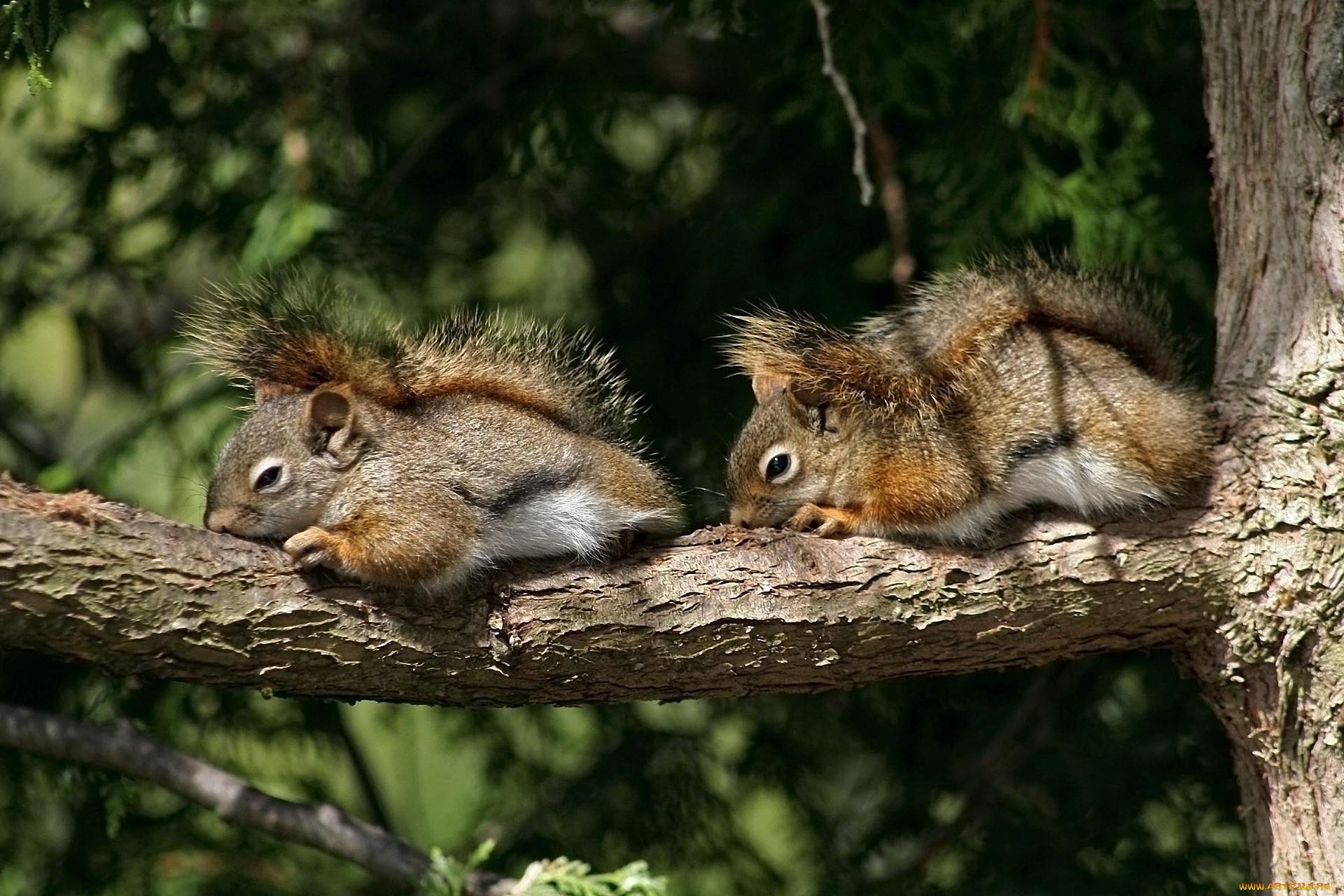 природа животные кролик листья осень деревья  № 2035344 без смс