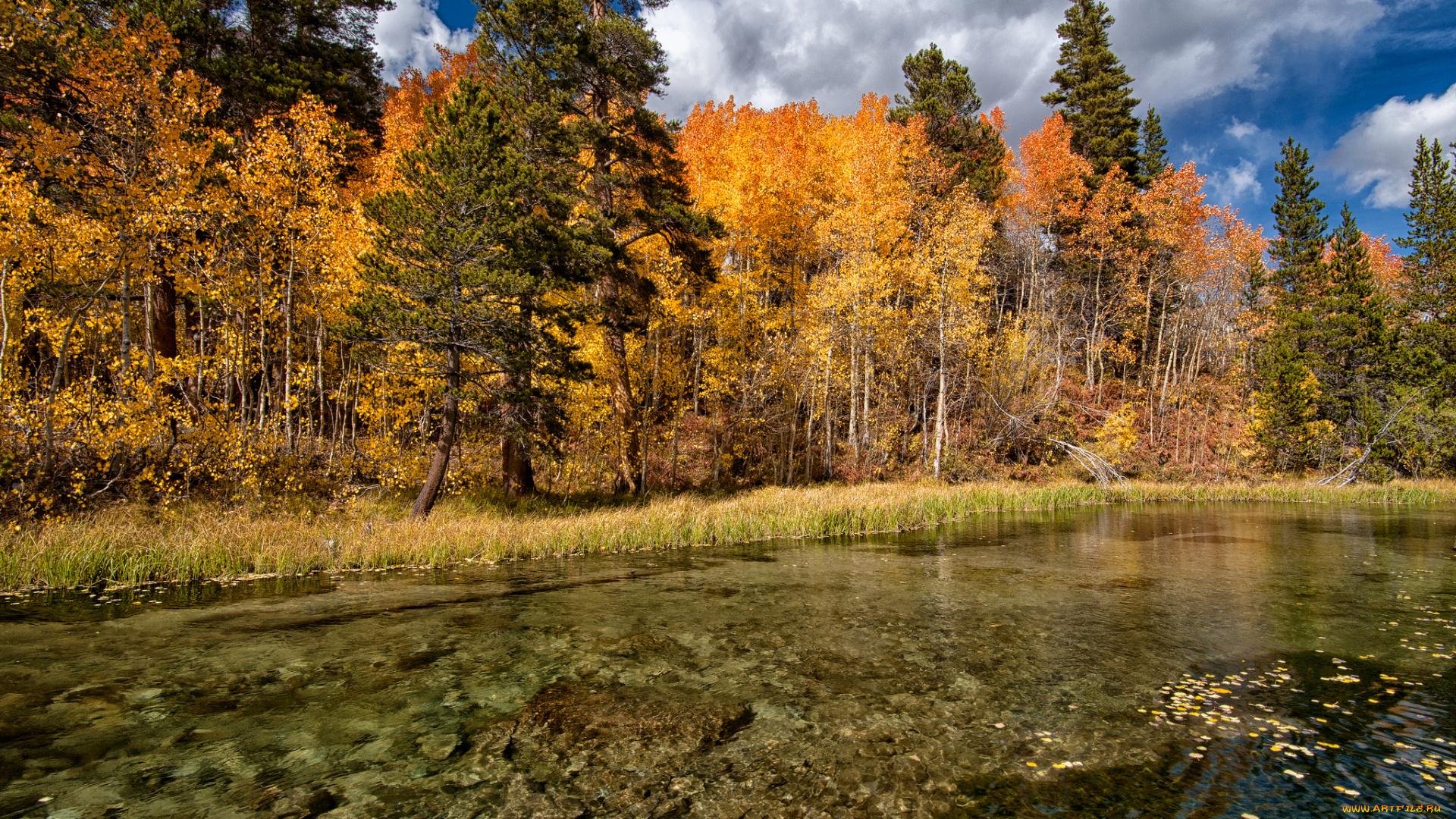 груша скороспелка фото природа осеннего леса извлечь