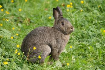 обоя животные, кролики,  зайцы, кролик, трава, лапки, ушки