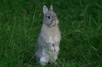 обоя животные, кролики,  зайцы, трава, забавный, ушки, кролик