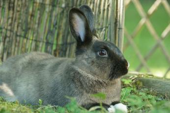 обоя животные, кролики,  зайцы, забавный, трава, ушки, кролик