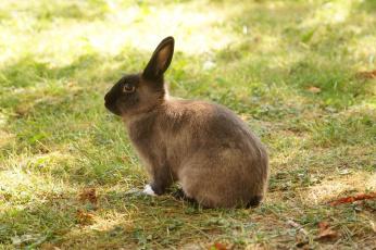 обоя животные, кролики,  зайцы, забавный, ушки, трава, кролик