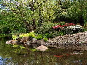 Картинка природа парк водоем камни