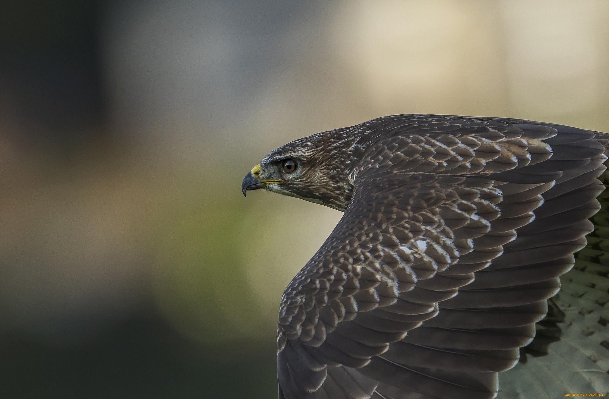 полет ястреб flight hawk без смс