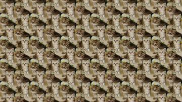 Картинка разное текстуры фон текстура котёнок малыш
