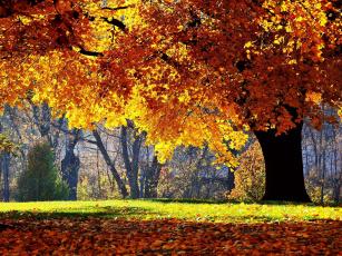 Картинка природа деревья трава желтые листья