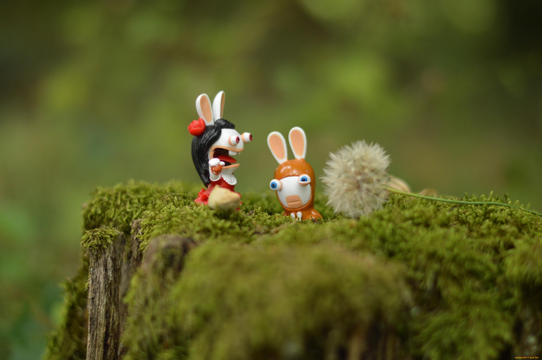 Кролик макро  № 3207721  скачать