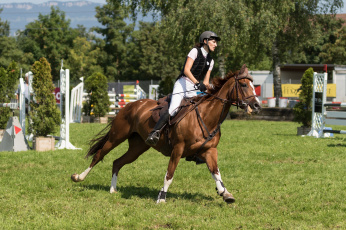 Картинка спорт конный+спорт ипподром лошадь жокей скачки