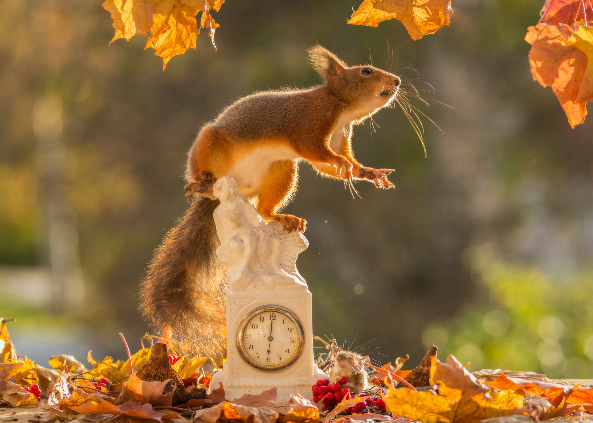 Животные осенью смешные картинки
