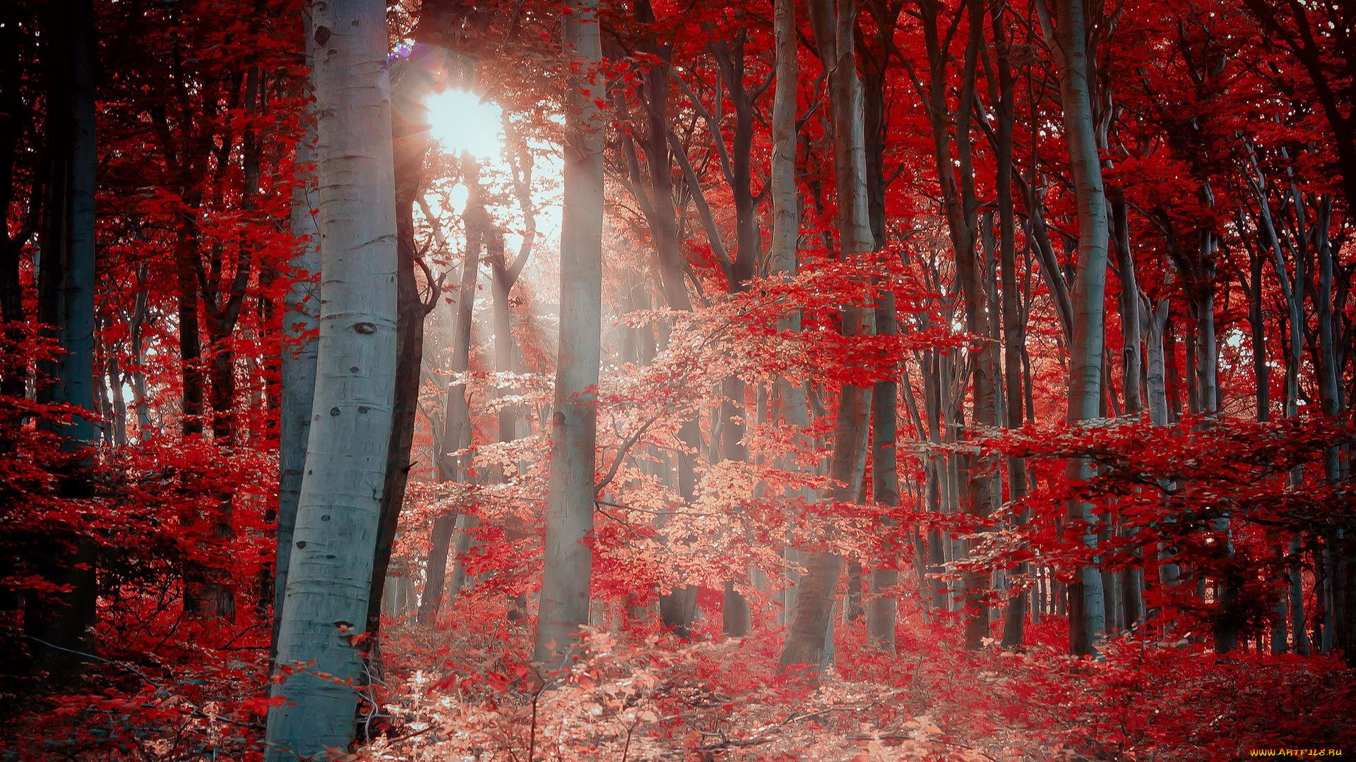красный осенний лес  № 249329 загрузить