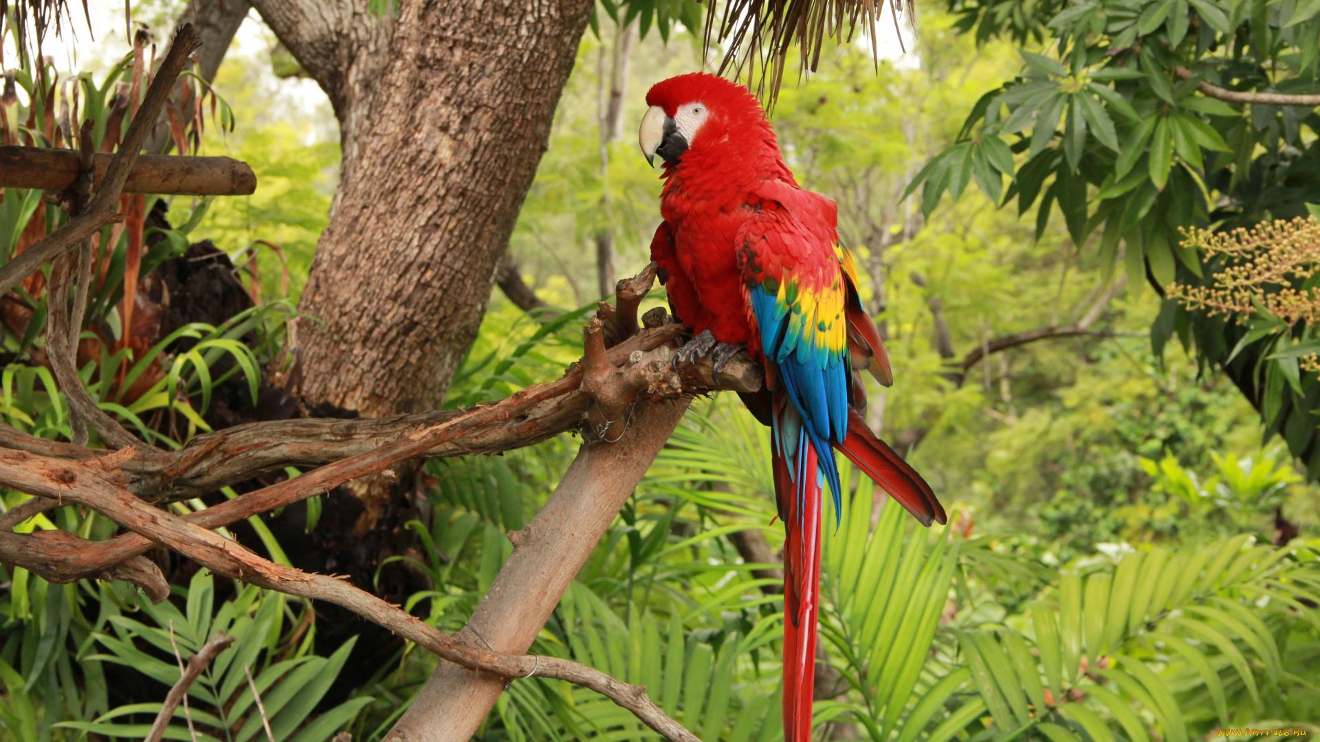 винтовка тропические животные фото совершенно разных