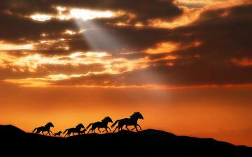 обоя животные, лошади, силуэт, закат, горы