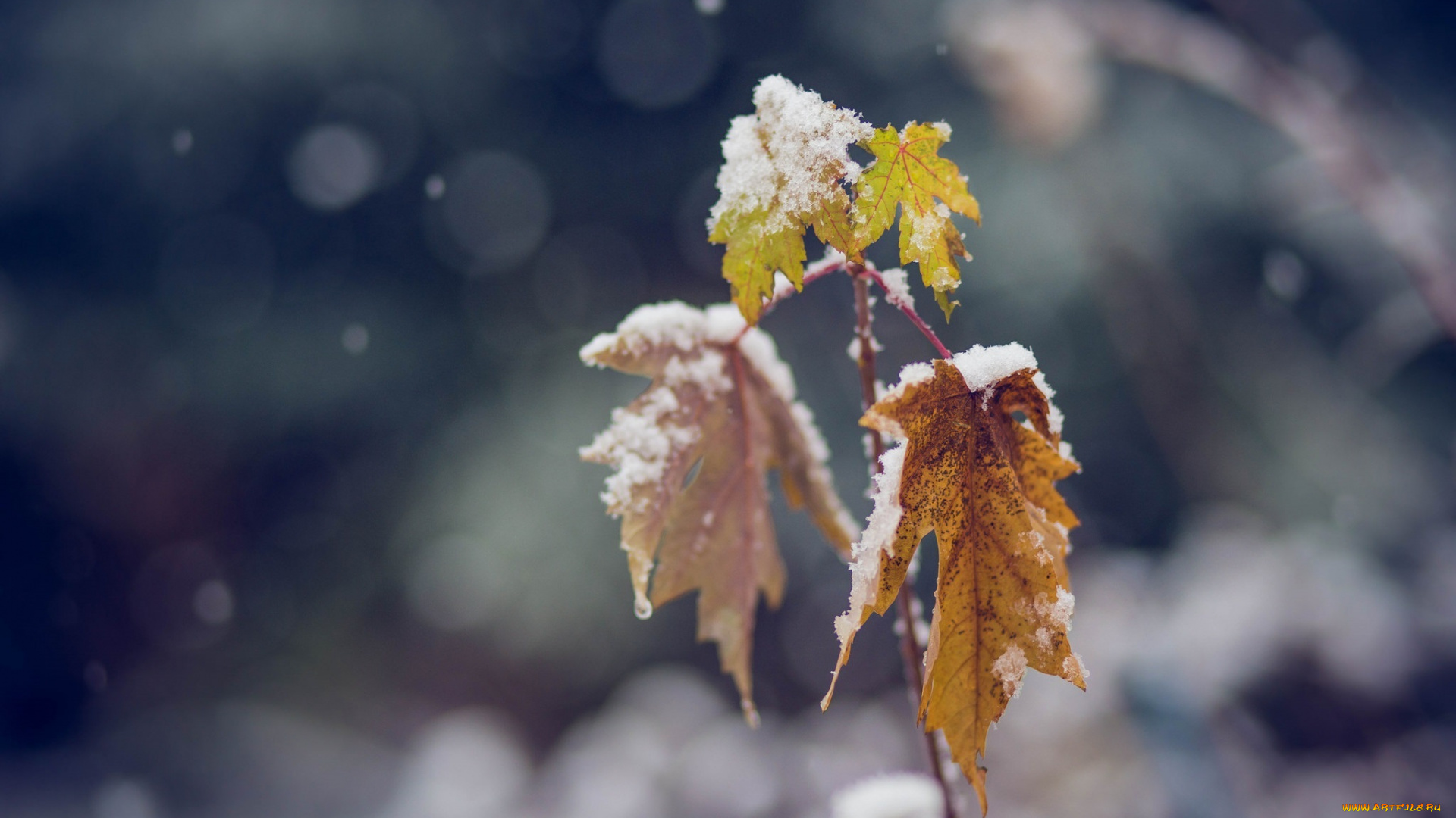 зима листья ветка природа загрузить