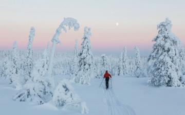обоя спорт, лыжный спорт, деревья, снег