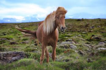 обоя животные, лошади, конь