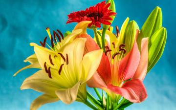 обоя цветы, букеты,  композиции, красная, желтые, розовая, гербера, лилии, букет