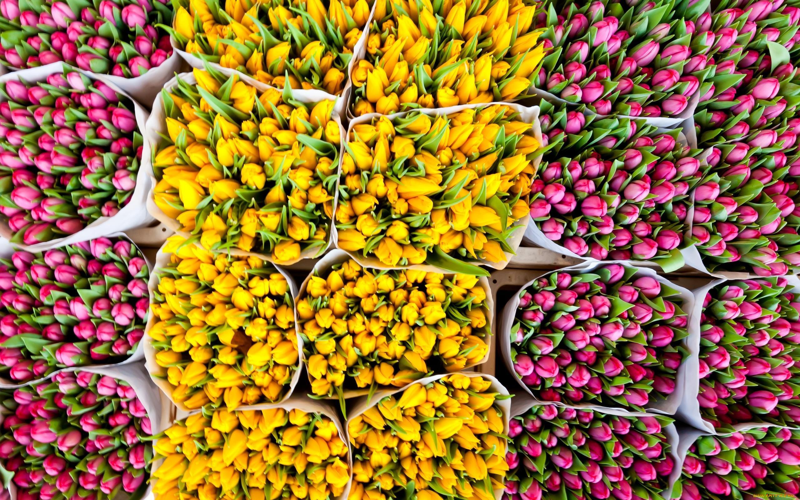 Цветы срезка опт цены