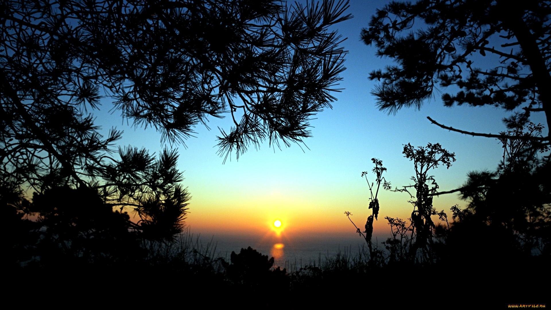 природа закат солнце деревья в хорошем качестве