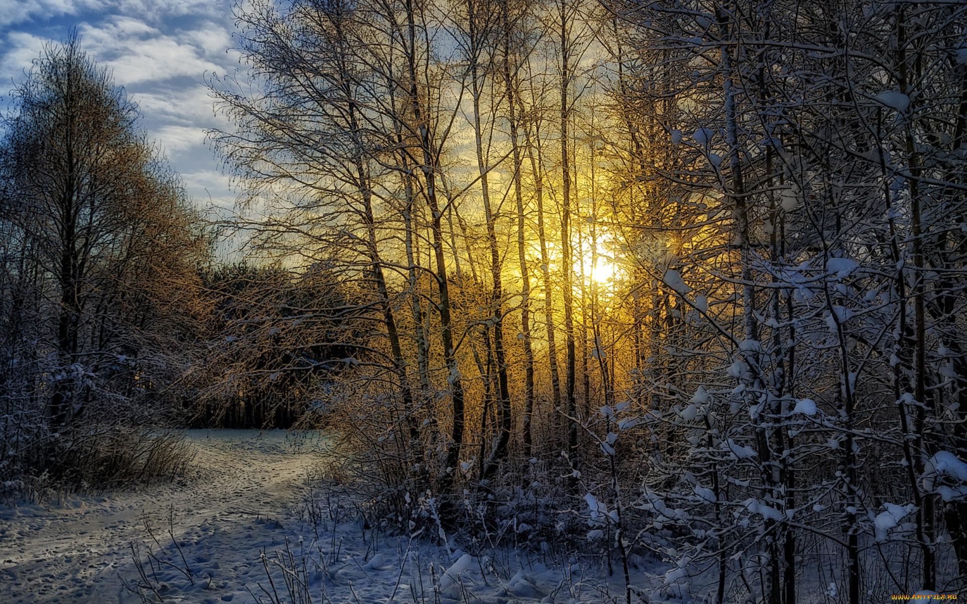 зимний солнечный лес  № 310371  скачать