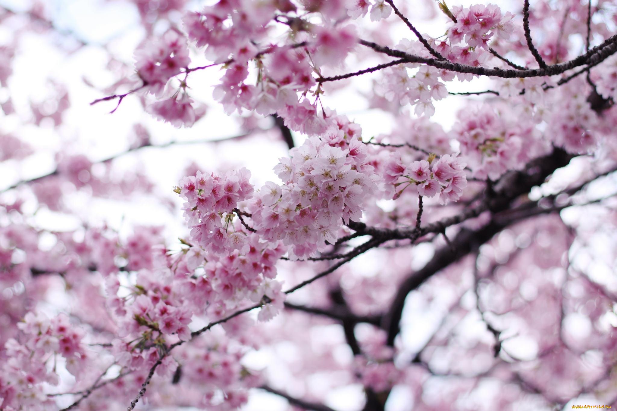 цветы картинки размер 2048 1152 что положительная реакция
