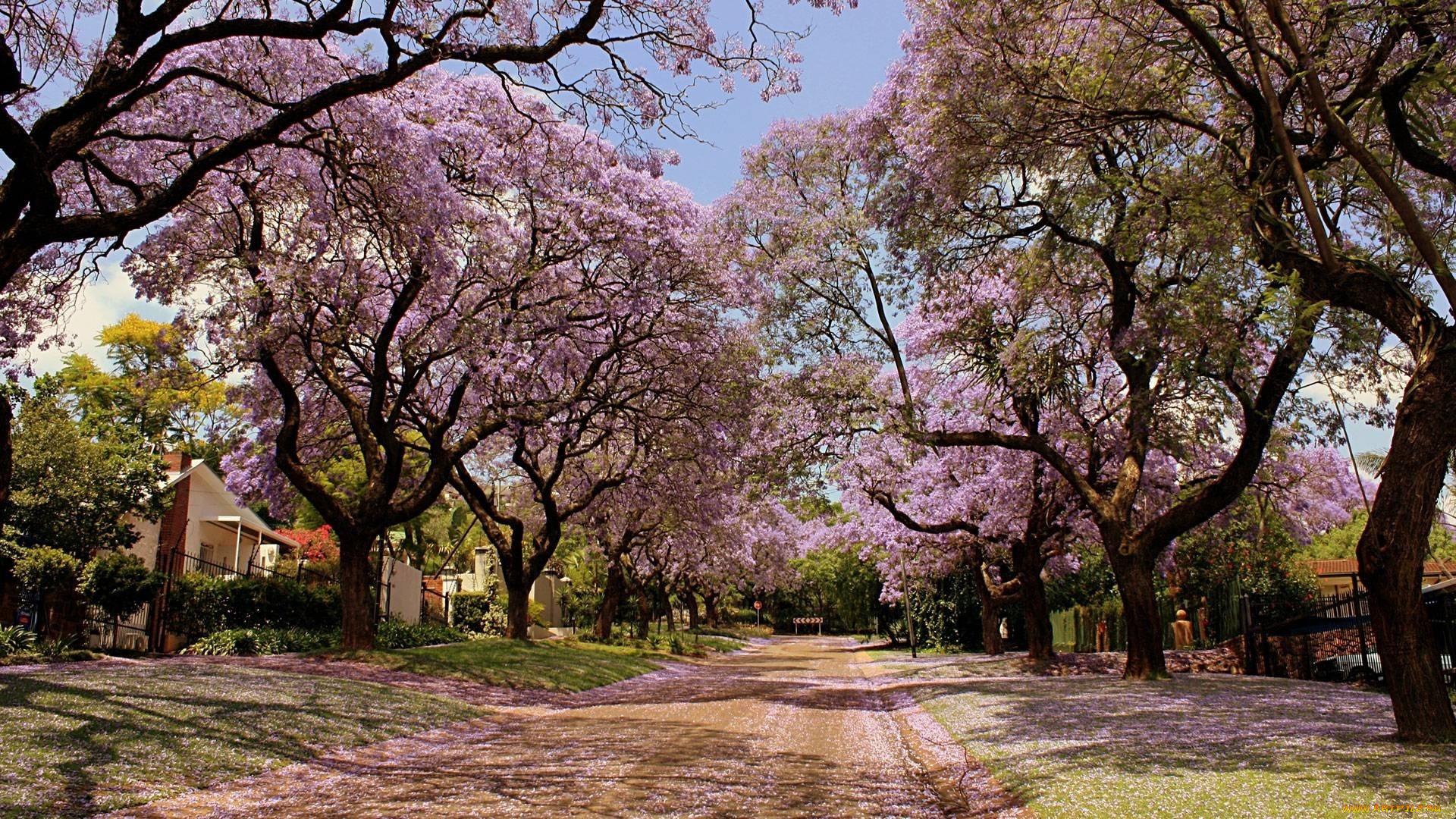 природа цветы деревья nature flowers trees без смс