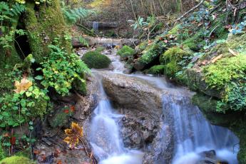 Картинка природа реки озера мох трава камни вода