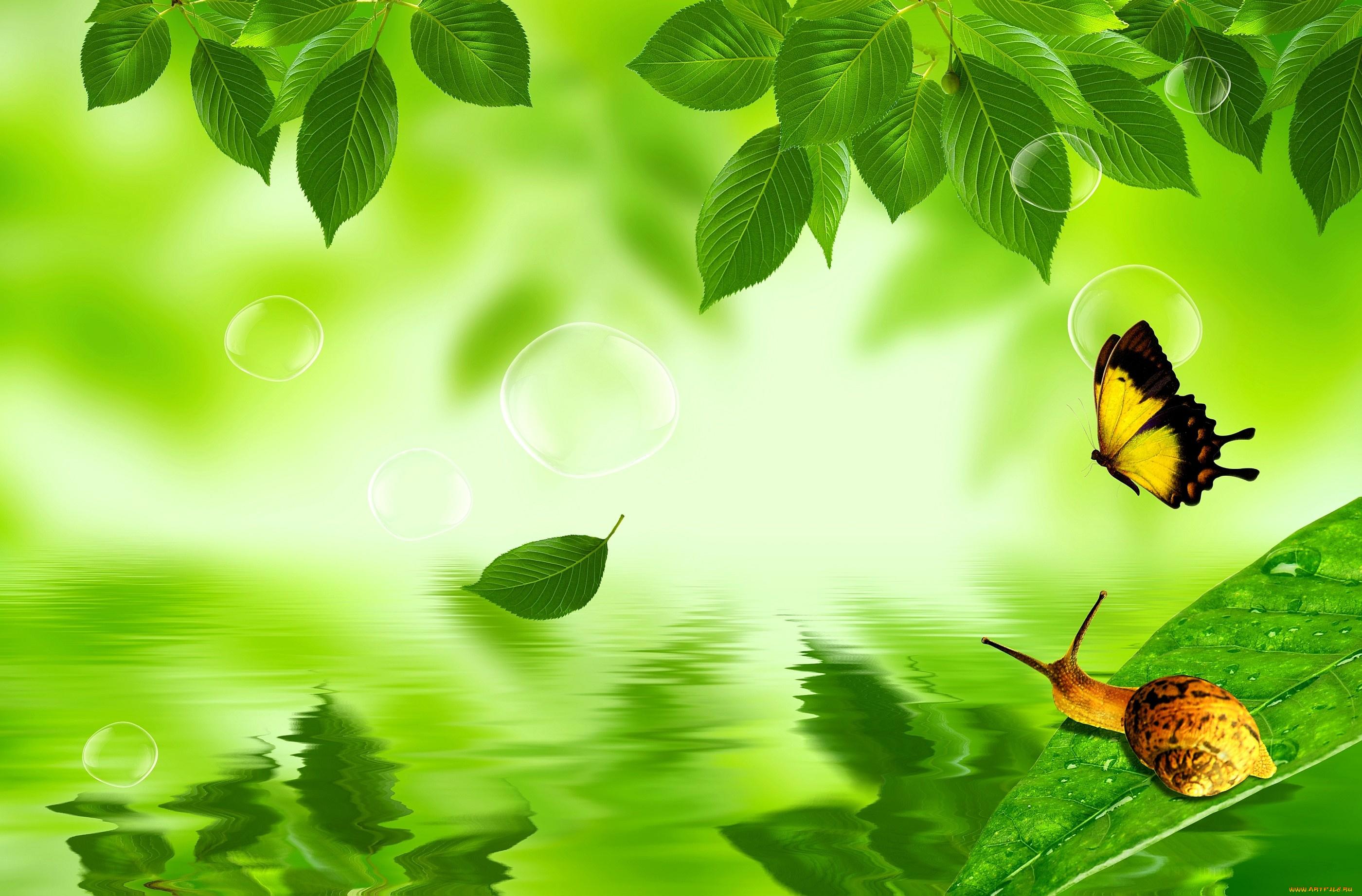 бабочка на зеленой траве  № 1396186 загрузить