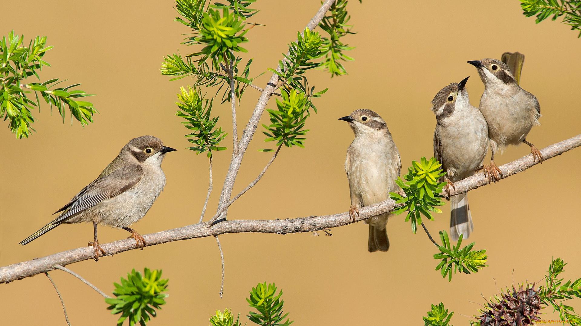 странно, картинки четыре птицы своем твиткаме ксения