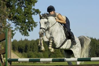 обоя спорт, конный спорт, девушка, наездница, препятствие, деревья