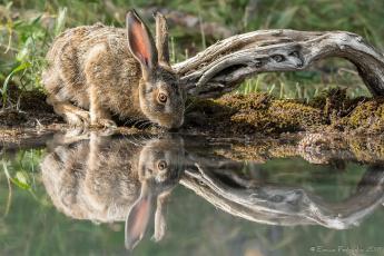обоя животные, кролики,  зайцы, трава, лапки, ушки, кролик, вода, бревно