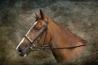 обоя рисованное, животные,  лошади, анфас