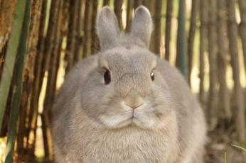 обоя животные, кролики,  зайцы, кролик, ушки, лапки, трава