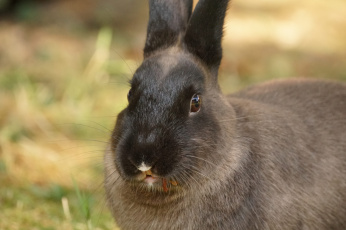 обоя животные, кролики,  зайцы, кролик, ушки, забавный, трава