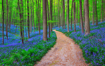 Картинка природа дороги лес бельгия
