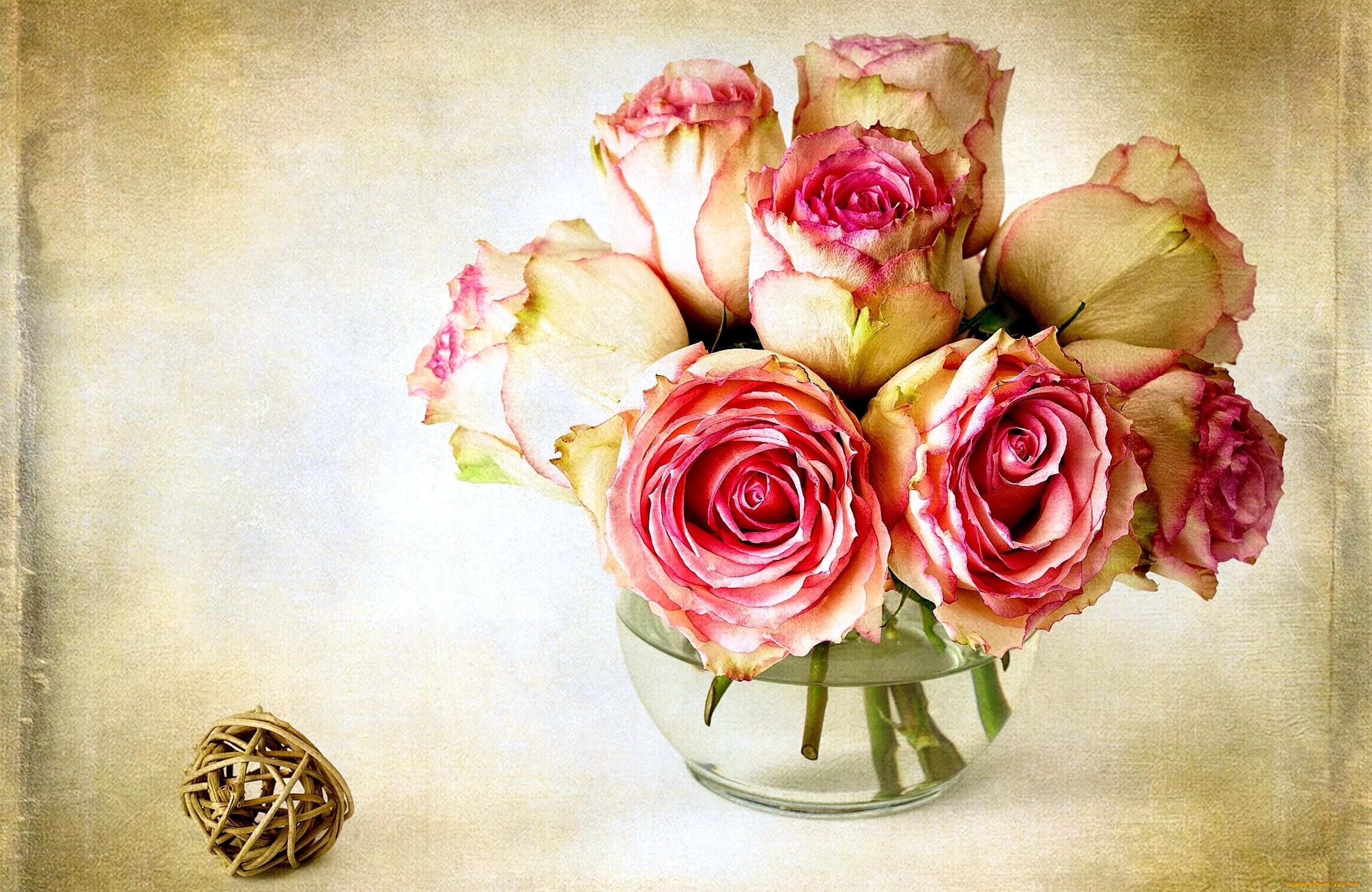 Открытки роз на рабочий стол, пчела