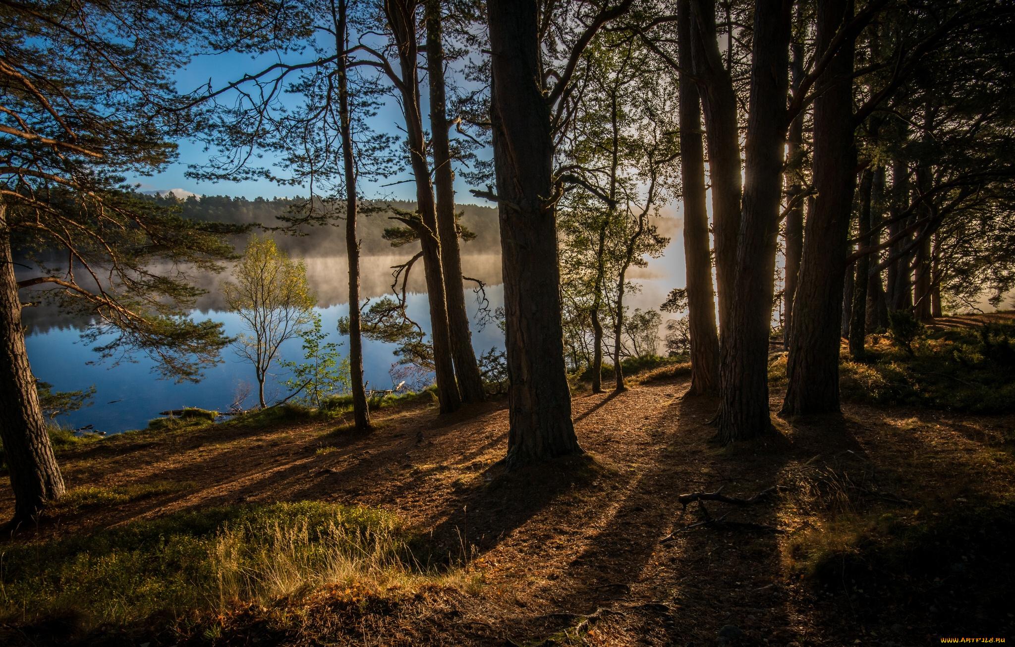 Леса Шотландии загрузить