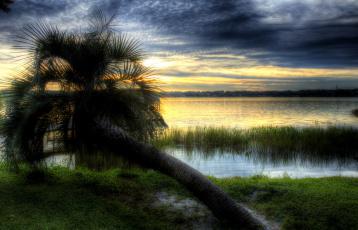 Картинка природа тропики сумрак тучи упавшая пальма трава озеро