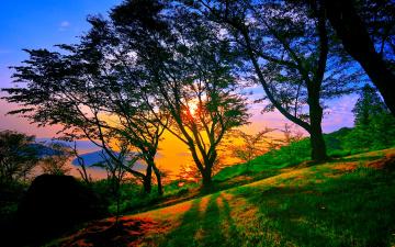 Картинка природа восходы закаты деревья свет склон