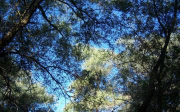 Картинка природа деревья ветви листья
