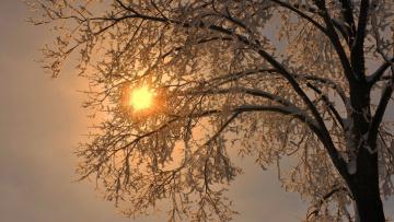 Картинка природа деревья ветки снег дерево